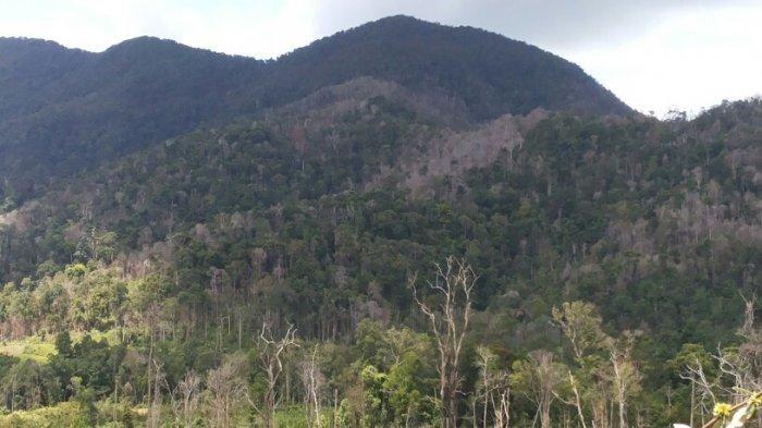 Kades di Riausilip Diminta Awasi Hutan Agar Tidak Terbakar