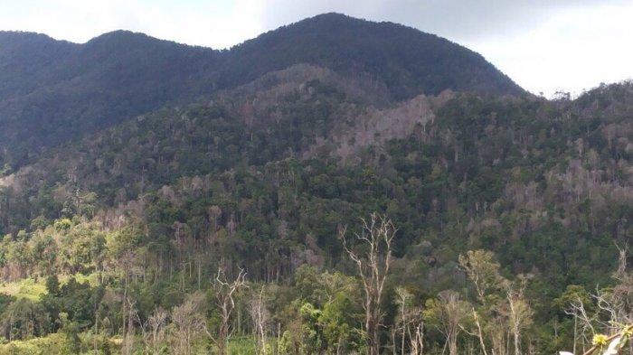 Pelanduk dan Napo Sulit Ditemukan di Taman Nasional Bukit Maras