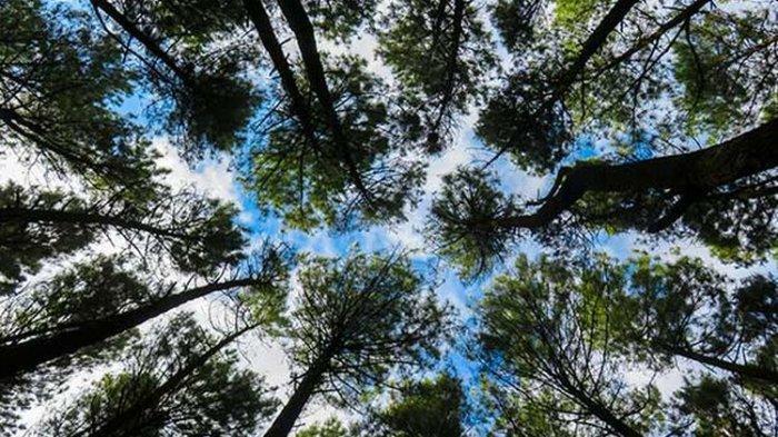 Mengingatkan Kembali Pentingnya Peran Hutan