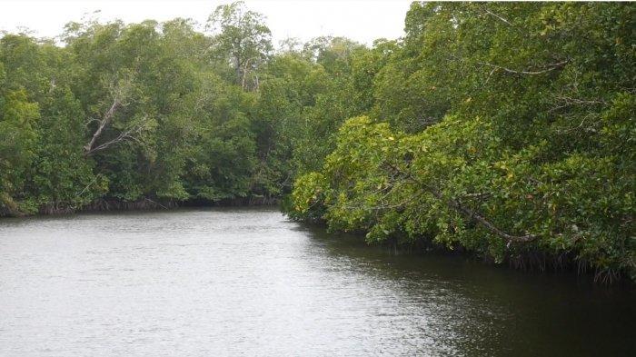 Hutan Mangrove Desa Rukam Bangka Barat