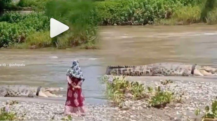 Buaya Besar Ini Tak Bergerak Ketika Didekati Ibu-ibu Berbaju Merah, Lalu Masuk ke Dalam Air