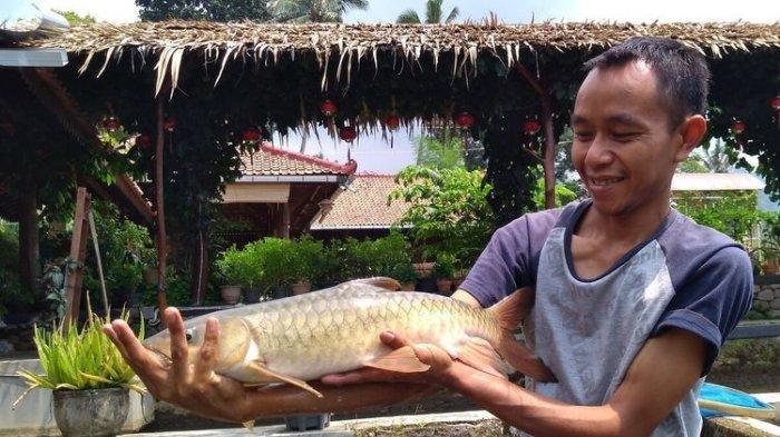 Jelang Imlek, Siapa Sangka Harga Ikan Ini Rp 1 Juta Per Kg, Jadi Incaran Warga, Paling Enak Disop