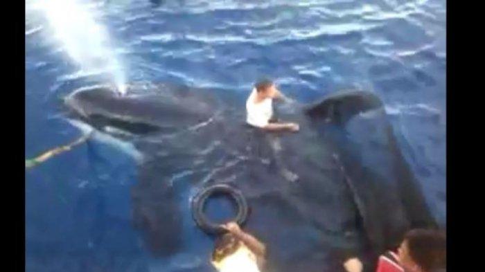 Nelayan Buang 2 Ton Ikan Demi Selamatkan Paus Pembunuh