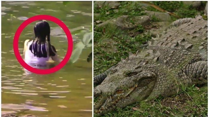 Kawanan Buaya Ganas Terkam Wanita Lagi Mandi, Sempat Teriak Histeris Lalu Hilang di Dasar Sungai