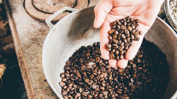 FAKTA Black Ivory Coffee, Kopi Mahal dari Kotoran Gajah