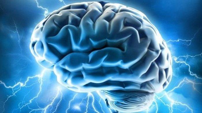 5 Jenis Makanan yang Baik Menjaga Kesehatan dan Meningkatkan Kemampuan Otak