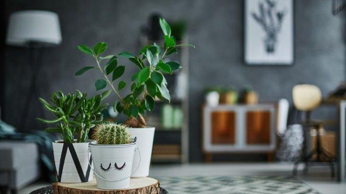 Jaga Kesehatan Mental, Ini 7 Manfaat Dekorasi Rumah dengan Tanaman Hias
