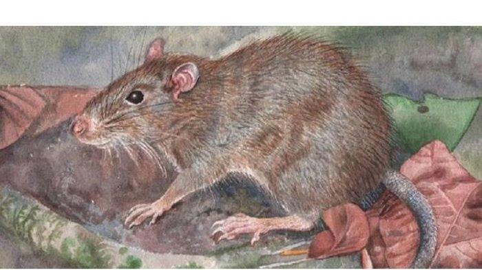 Sudah Bersih-bersih, Ini Alasan Kenapa Tikus Masih Sering Masuk ke Rumah
