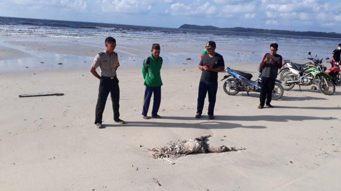 Breaking News, Mayat OTD Tergeletak di Pantai Tanjung Merun Tanjung Labu