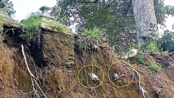 Bikin Merinding, Makam di Tepi Anak Bengawan Solo Longsor, Jenazah di Dalam Kafan Tersangkut Pohon