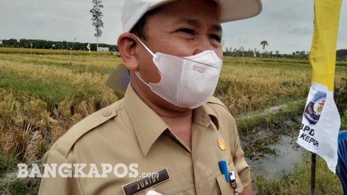 Pemerintah Bangka Belitung Targetkan Porang Ditanam di Lahan 1.200 Hektare