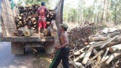 Kardi Mau Beli Pohon Karet Tua Tak Produktif Lagi