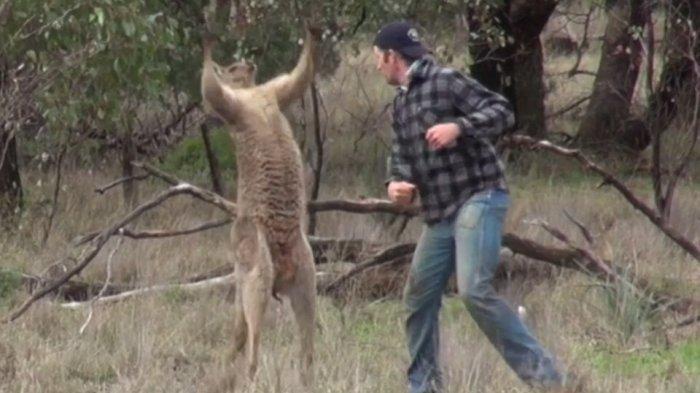 Hewan Ini Muncul di Kota Saat Australia Lockdown