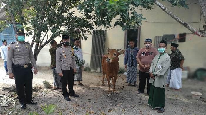 Rayakan Idul Adha, Kapolres Bangka Selatan Serahkan Satu Sapi ke Ponpes Tarbiyahul Mubtadiin Toboali