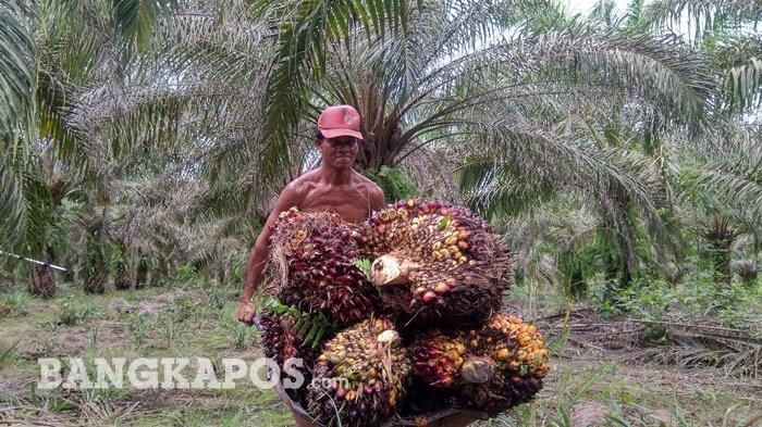 Karim (47), Buruh Harian Lepas Kebun Sawit di Bangka