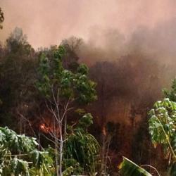 Kebakaran yang melanda kawasan hutan konservasi Bukit Maras baru-baru ini