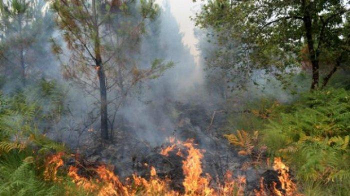 Hutan di Kecamatan Kelapa Ini Sewaktu-waktu Bisa Membara