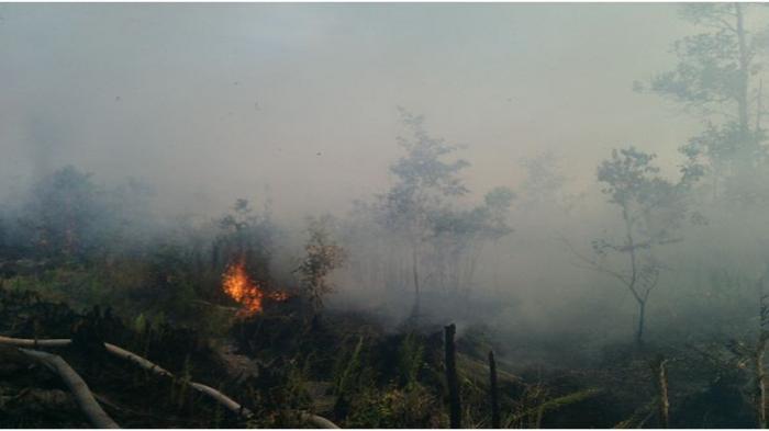 Api Dekati Rumah Warga Dusun Tutut
