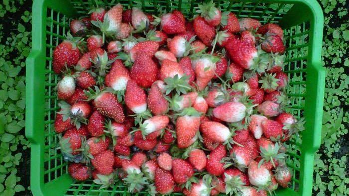 Buah-buahan Ini Dianggap Tak Cocok bagi Pemilik Golongan Darah O