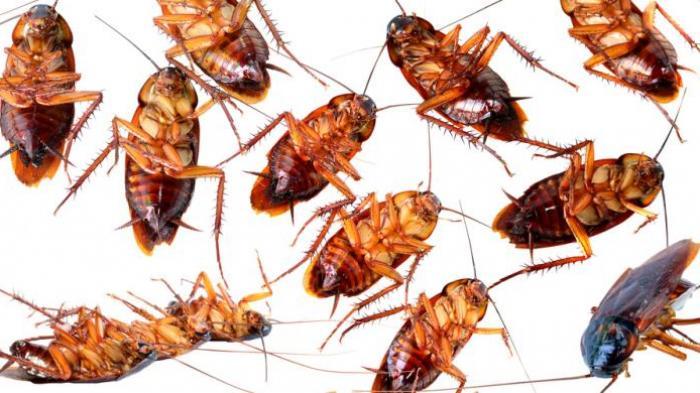 Cara Mudah Mengusir Serangga dari Rumah, Tak Perlu Bahan Kimia Cukup Pakai Bahan Dapur Ini Saja