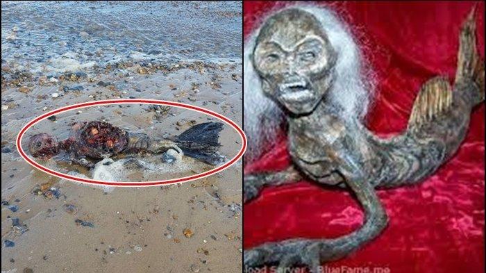 Heboh, Kerangka Putri Duyung Ini Ditemukan di Pantai Great Yarmouth, Ini Fakta Ilmiahnya