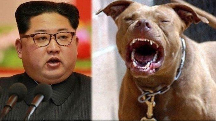 Ilustrasi -- Kim Jong Un pernah siksa pamannya sendiri untuk dijadikan umpan makanan anjing