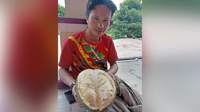 Putri Tumbek Sikojek Durian Andalan Bukit Tiung Belo Laut Muntok, Rasanya Legit Menggoda
