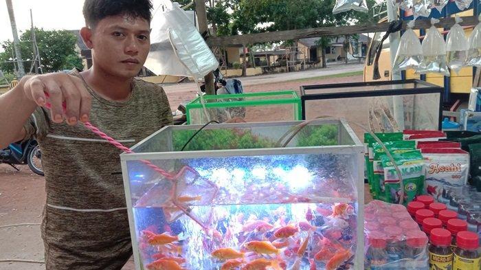 Penjual Ikan Hias di Pinggir Jalan Bundaran Koba, Alami Penurunan Penghasilan Drastis