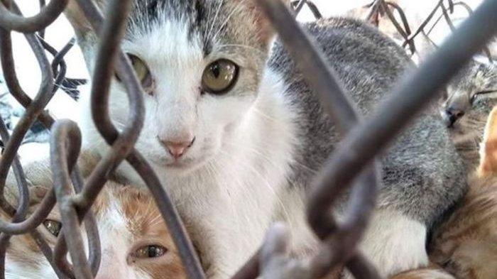 Harus Dimengerti, Ini 5 Cara Bikin Kucing Cepat Gemuk