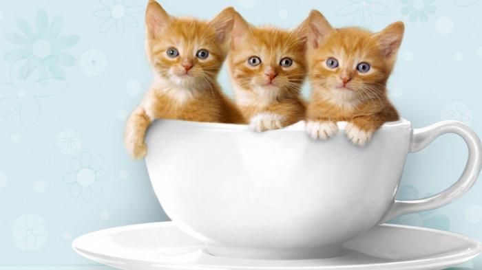 Inilah Kisah Keistimewaan Kucing Dalam Sejarah Islam Bangka Pos