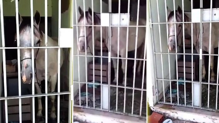 Edan! Kuda Ini Ditahan di Kantor Polisi, Ternyata Alasannya Karena Ini