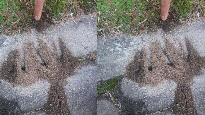Subhanallah, Semut Gotong Royong Bikin Lafaz Allah di Tepi Jalan