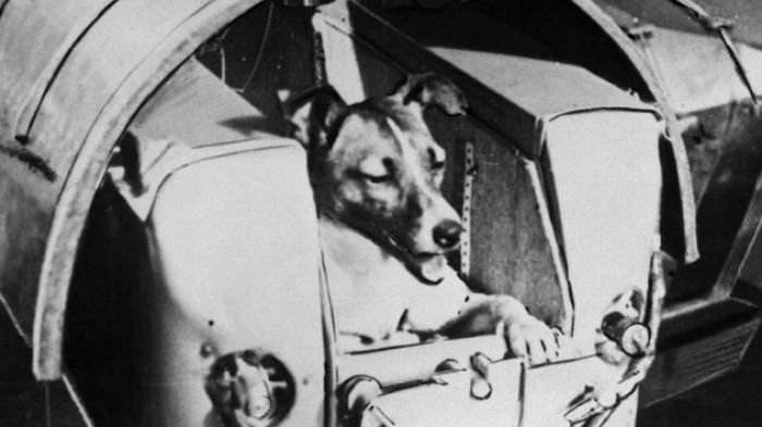 Kisah Menyedihkan Laika, Anjing Astronot Malang yang Jadi Pahlawan Antariksa Uni Soviet