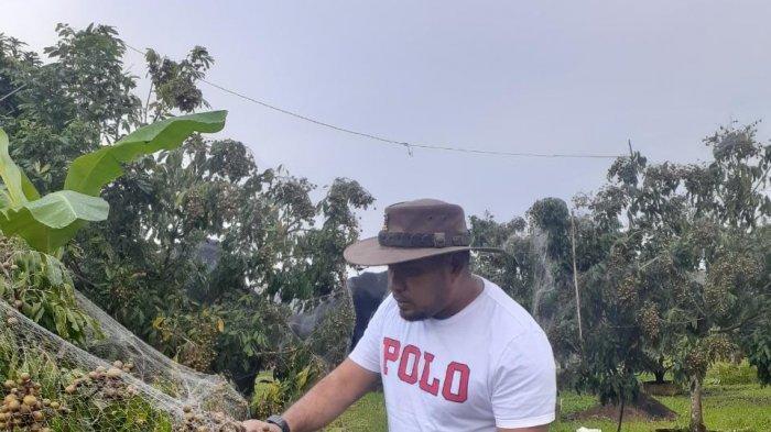 Andri Tokoh Masyarakat Desa Sekar Biru,Parittiga Kabupaten Bangka Barat Sedang Berada Di Kebun Lengkeng Miliknya Yang Merupakan Lahan Eks Tambang