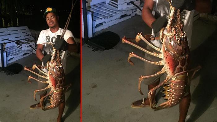 Lobster Raksasa, Ditemukan di Perairan Bermuda