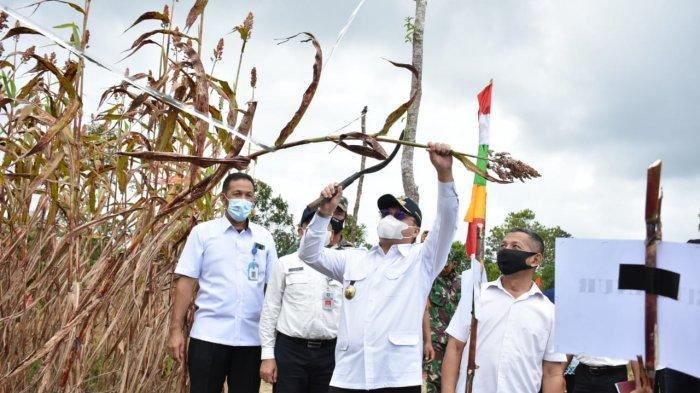 Gubernur Erzaldi Saksikan Langsung Proses Pengolahan Sorgum hingga Jadi Beras: Ini Aman dan Sehat!