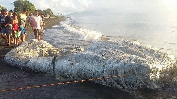 Makhluk Laut Berambut Mengerikan Terdampar di Pantai, Warga Panik!