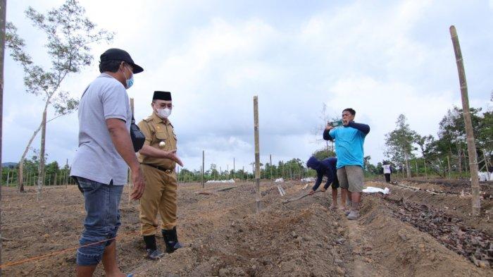 Gubernur Erzaldi saat mengunjungi lokasi penanaman jahe merah di Desa Air Mesu, Rabu (28/4).