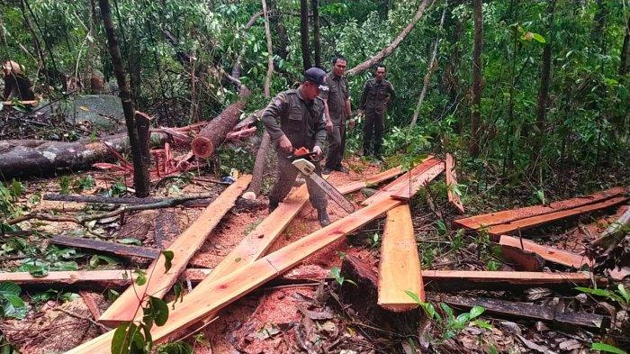 Pelaku Illegal Logging Kabur, Tiga Titik Digeruduk Tim Gabungan Gakkum KLHK