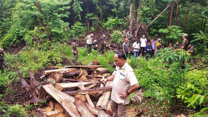 Tim Gabungan Gakkum KLHK Tindak Aktivitas Ilegal Loging di Tahura Bukit Menumbing Muntok