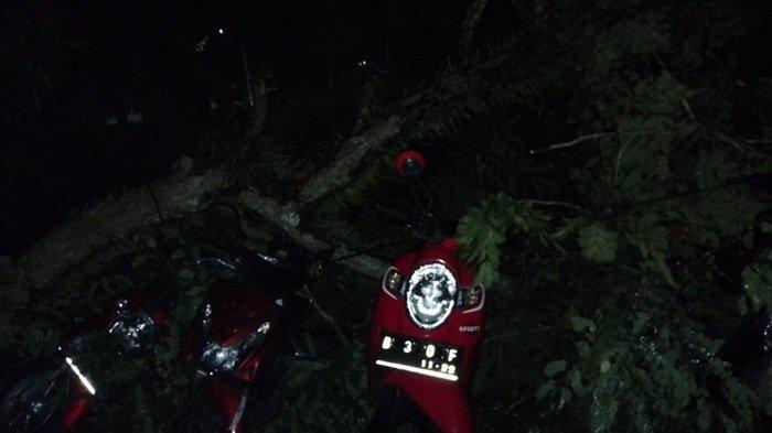 Breaking News, Pohon Tumbang Akibat Angin Kencang Hantam 10 Motor Pelanggan Warkop 99