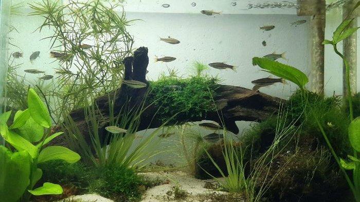 The Tanggokers, Komunitas Suka Nanggok Ikan dan Peduli Ikan Endemik Bangka Belitung - nangk3.jpg