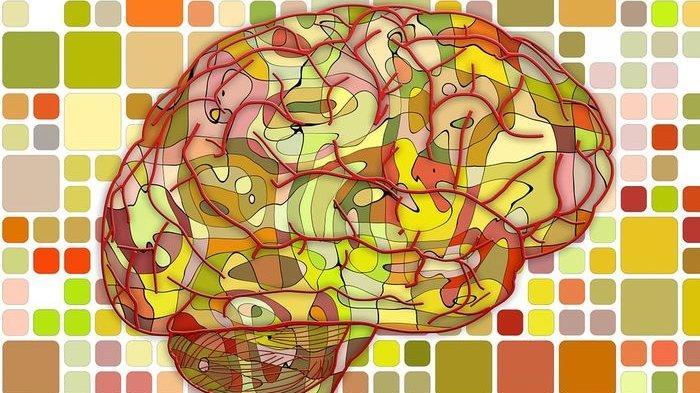 Mau Tahu Seberapa Besar Kapasitas Otak Manusia? Kamu Pasti Takjub