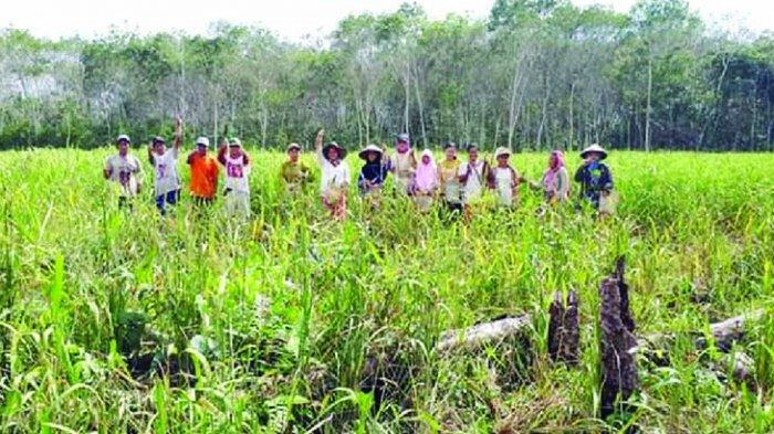 Desa Sinar Sari Fokus Kembangkan Sektor Pertanian