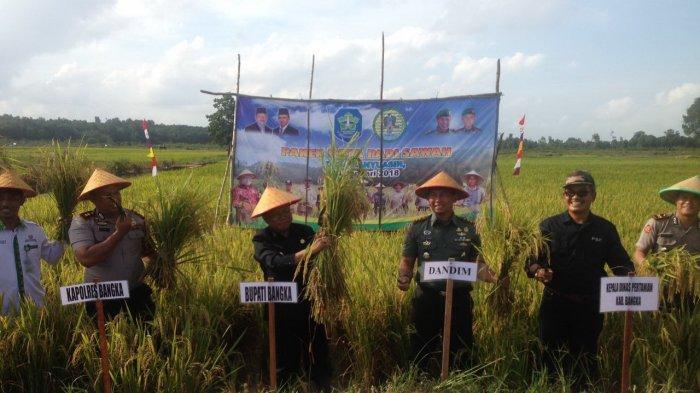 Desa Banyuasin Panen Padi, Orang di Kampung tak Beli Beras Lagi