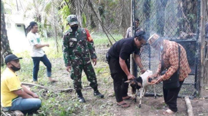 Ritual Kambing Putih dan Komat-kamitnya Sang Pawang Taklukkan Harimau Pemangsa di Singkil