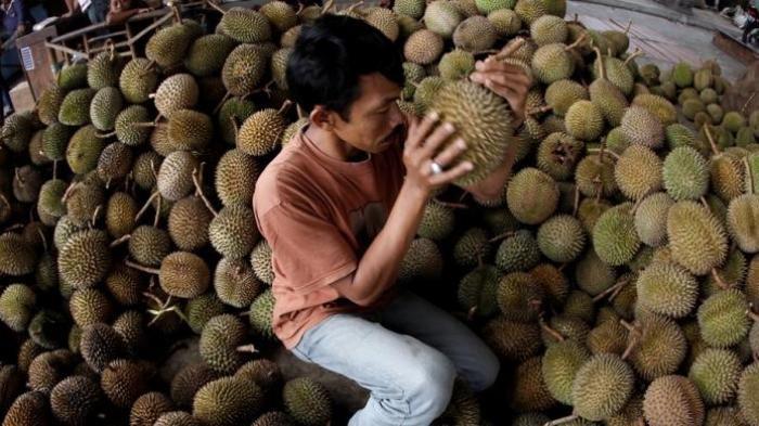 10 Cara Jitu  Memilih Durian Matang dan Manis Tanpa Tertipu Penjual