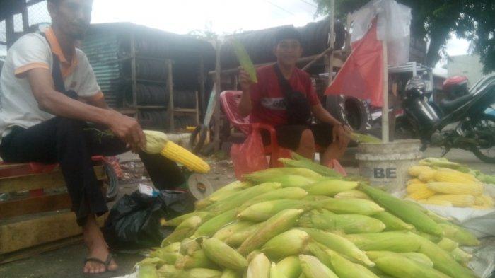 Jelang Tahun Baru, Pedagang JagungIni Kebanjiran Pembeli, 150 Kg Ludes Terjual