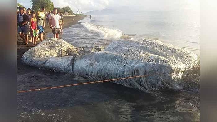 Ditemukan Terdampar di Pantai, Makhluk Apa Ini, Bentuknya Aneh Baunya Ya Ampun!