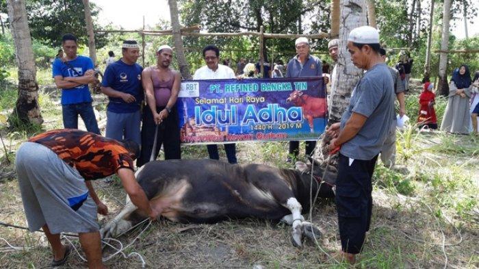Tahun Ini RBT Sebarkan 44 Hewan Kurban di Pulau Bangka dan Belitung